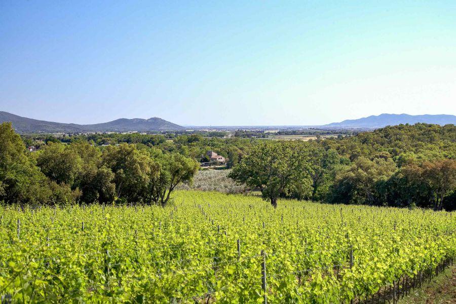 La Doc Maremma al terzo posto in Toscana per superficie