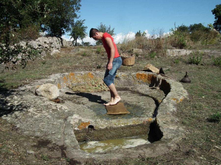 Pietra e vino. I palmenti rupestri della Sardegna centrale