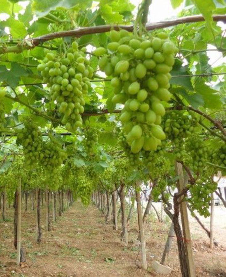 Quale innovazione tecnologica nella filiera viti-enologica italiana?