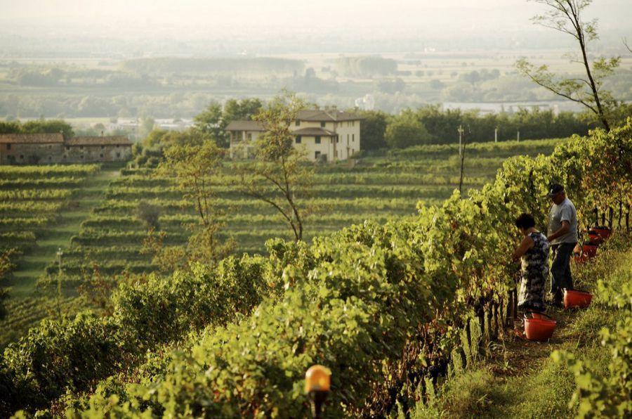 #iorestoacasa: a consegnare le eccellenze del territorio ci pensano le aziende del Friuli Venezia Giulia