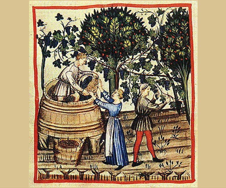 Il recupero delle vigne monastiche