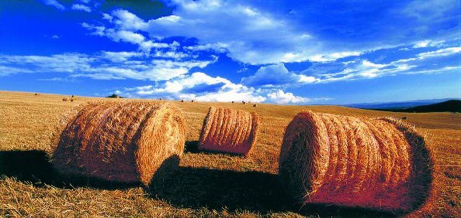 Agricoltura, sostegno e integrazione