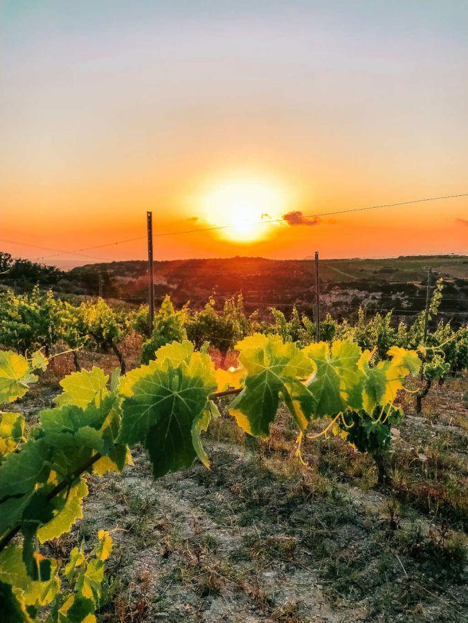 Un sapere che e' tradizione, un vino che e' identita'