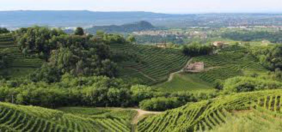 Emergenza covid-19: i controlli nella filiera agroalimentare