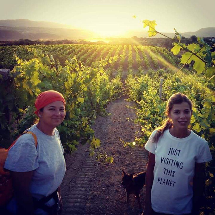 Due sorelle e il vino della Romangia