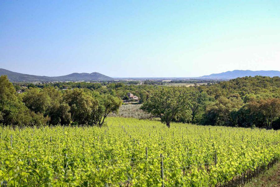 Modifica Doc Maremma Toscana