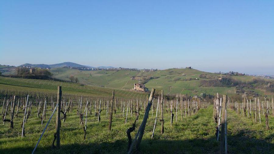 Auguri all'Oltrepò Pavese Pinot grigio