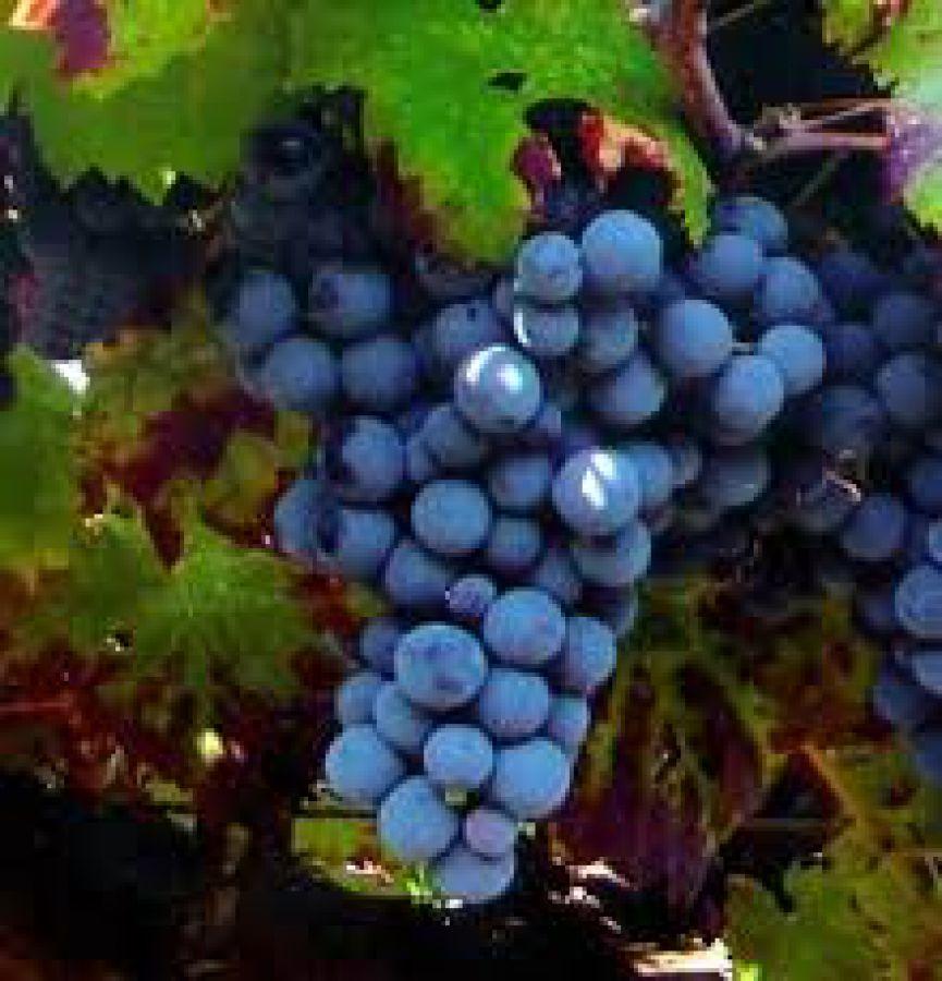 Auguri al Pinot Nero dell'Oltrepo' Pavese
