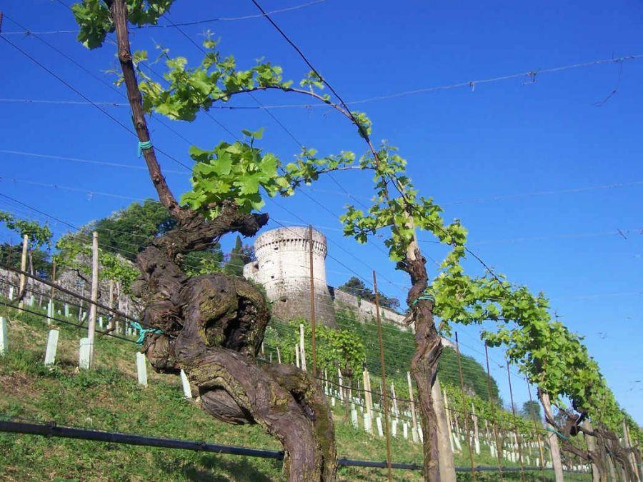 Provincia di Brescia, un Territorio di Vino