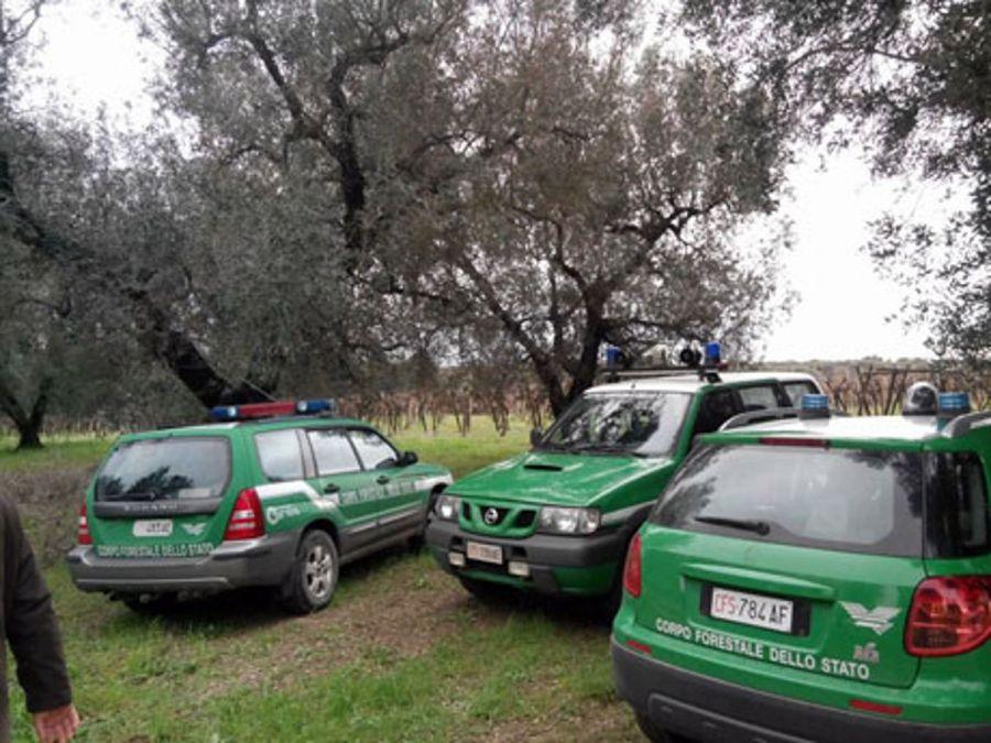 Fondazione UniVerde: salvare il Corpo forestale dello Stato
