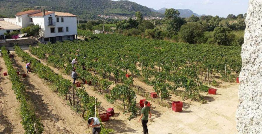 Strategie di Internazionalizzazione nel settore vitivinicolo:  il caso di un'azienda del Nord Sardegna
