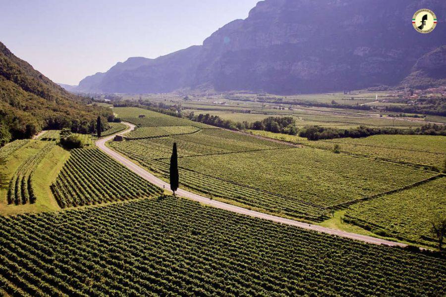 Pinot grigio delle Venezie chiude 2020 positivamente