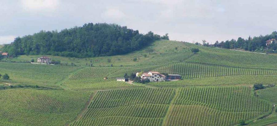 La Piotta, da più di trent'anni viticoltura biologica per passione