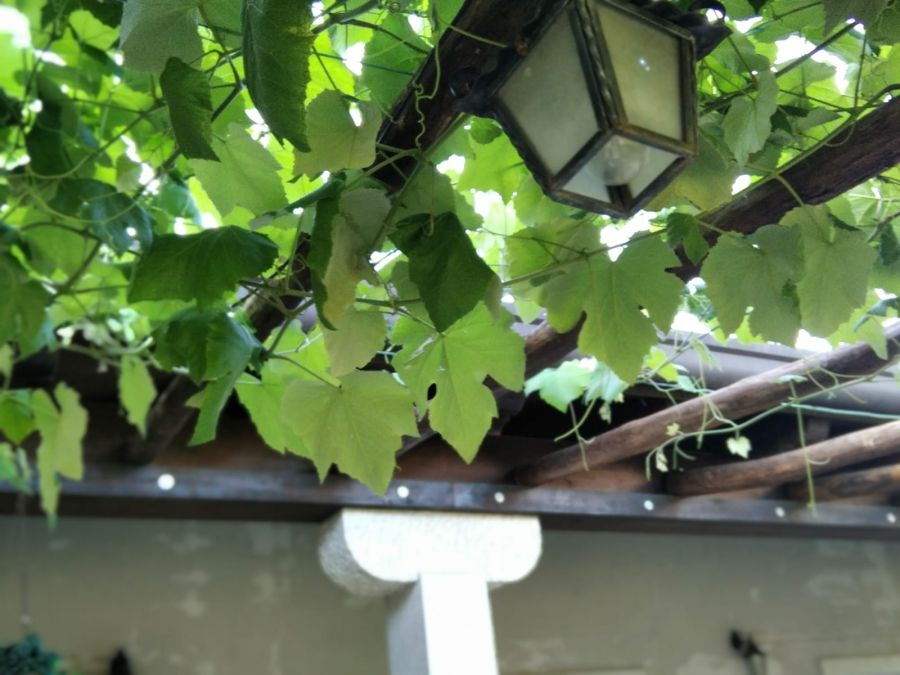 Calici di Stelle Fvg: a Duino Aurisina si svela calendario