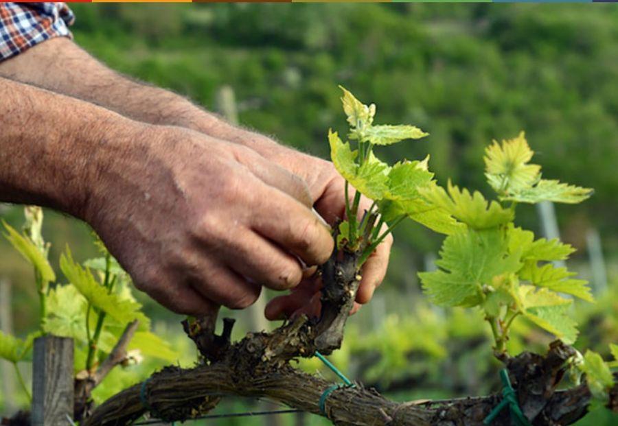"""La Carbon Footprint del vino"": Cantina Salcheto di Montepulciano (SI)"