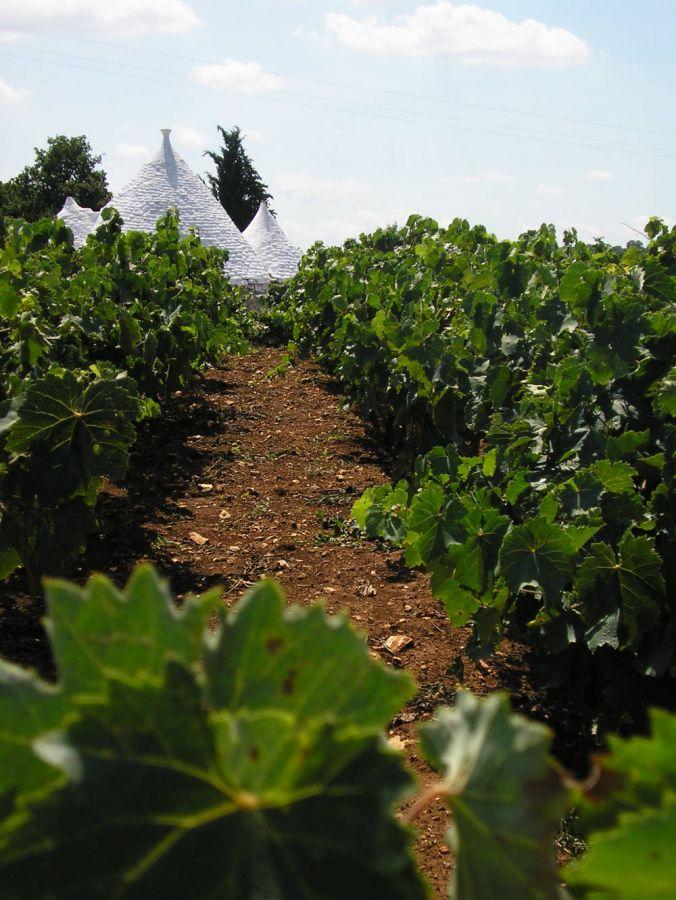 Un buon vino nasce prima di tutto in campagna