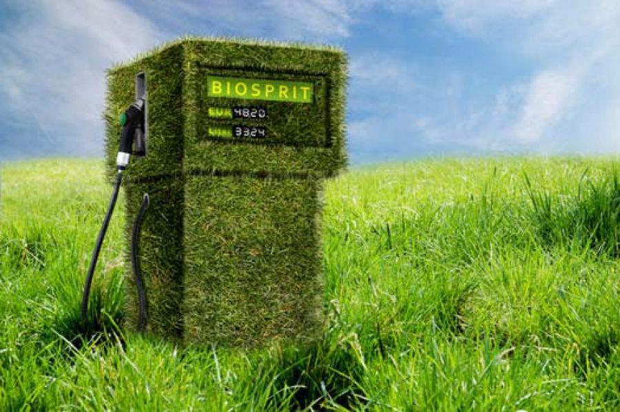 Bioenergie: una potenzialità enorme per le fonti alternative