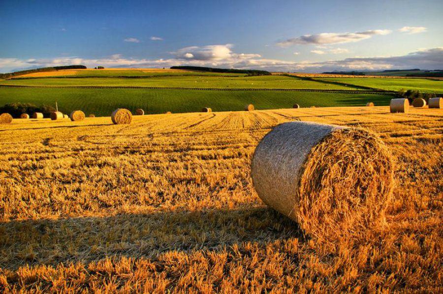 IMU agricola, dibattito tra i Sindaci: