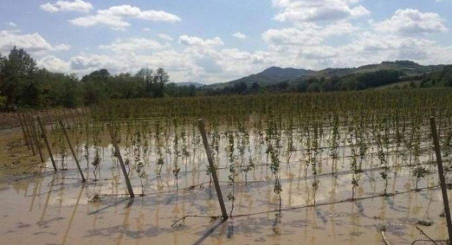 Città del Vino: aiuti urgenti per i viticoltori del Sannio danneggiati dal maltempo