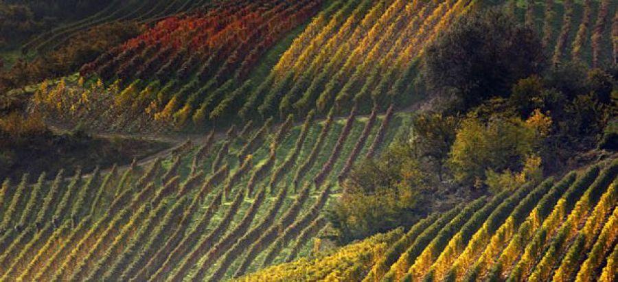 PRG del Vino, esperienze a confronto