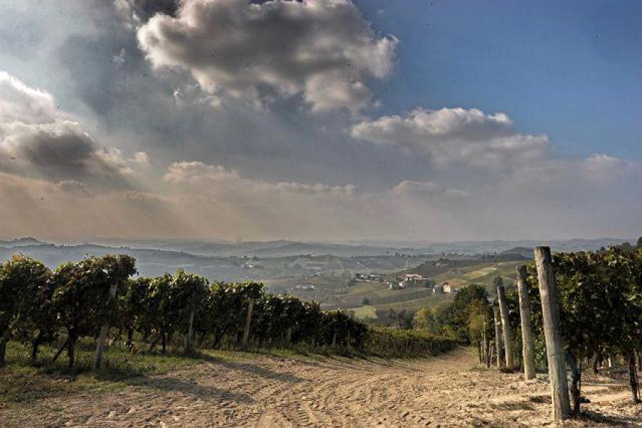 Cambiamenti climatici, è urgente più ricerca per il Vigneto Italia