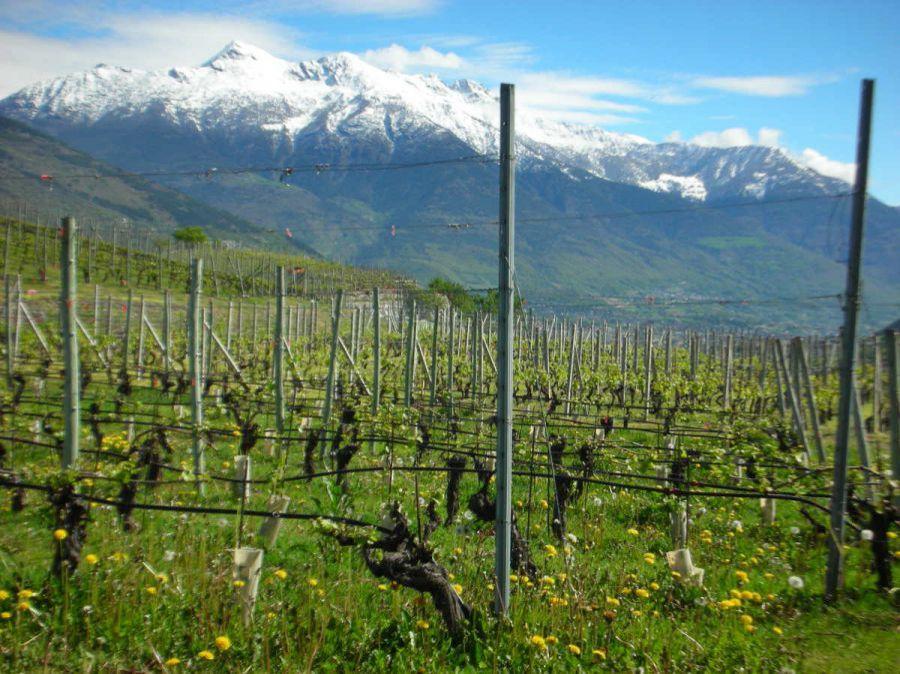 Vins Extrêmes. Il Meglio dei vini d'alta quota