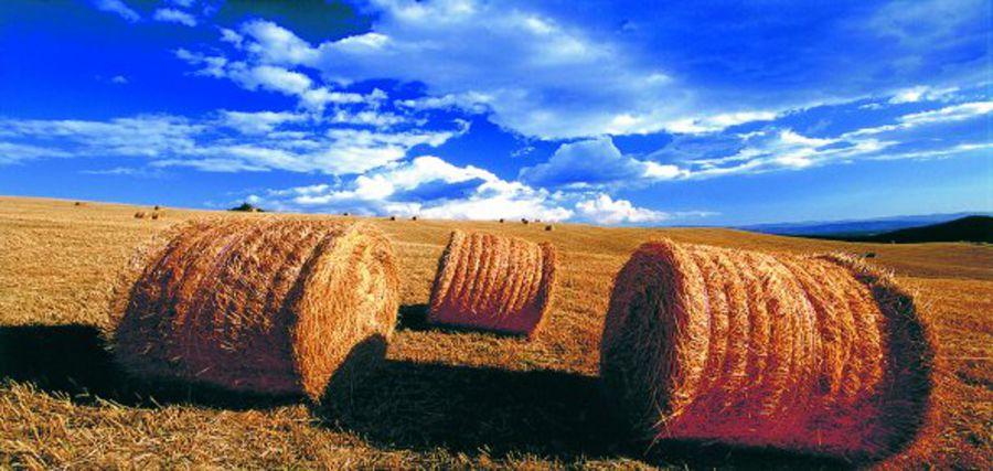 Approvato dl contro lavoro nero in agricoltura