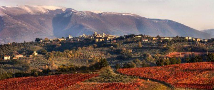 Anteprima Sagrantino 2012: al via quattro concorsi per diffondere la cultura del celebre vitigno umbro