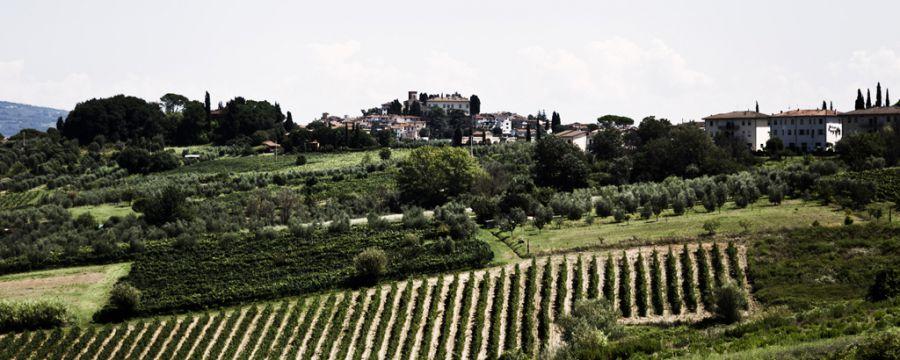 Vigneto Italia, parte la liberalizzazione degli impianti