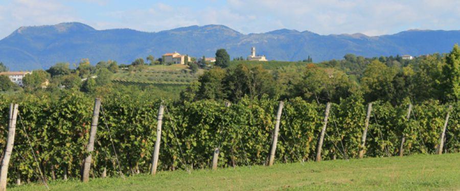 Viticoltura a San Pietro di Feletto: aspetti e problematiche 2016