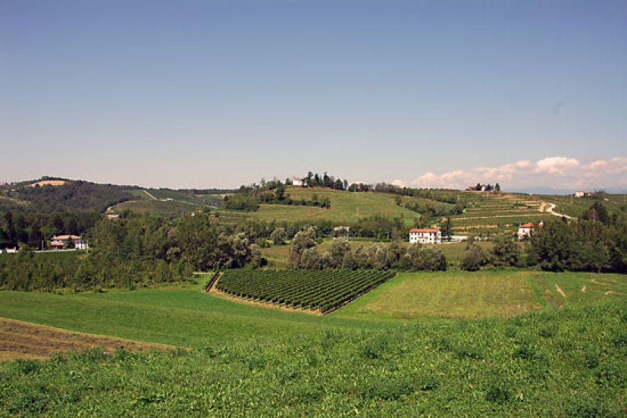 Vino, registrati 10 nuovi vitigni resistenti alle malattie