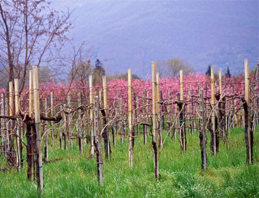 Ronchi di Brescia