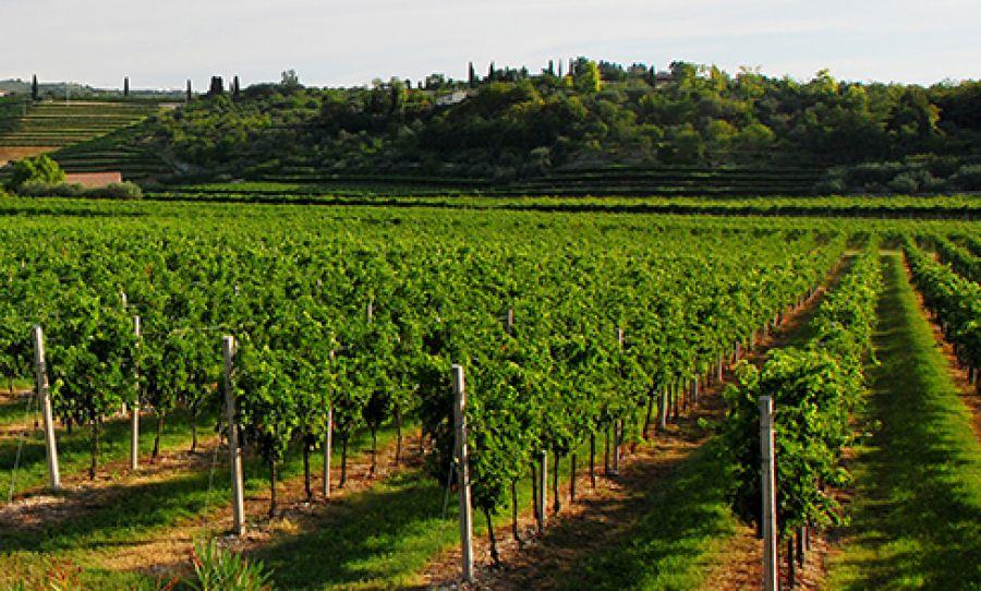 Verona o Provincia di Verona o Veronese