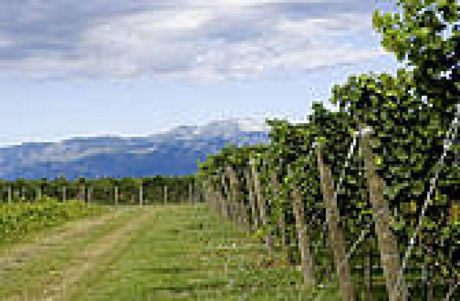 Friuli Grave