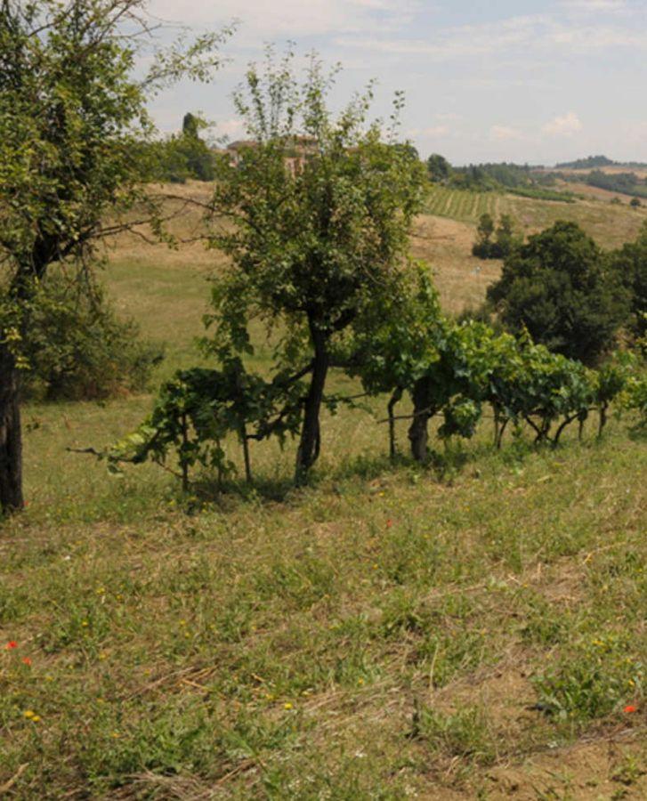 Vin Santo di Montepulciano