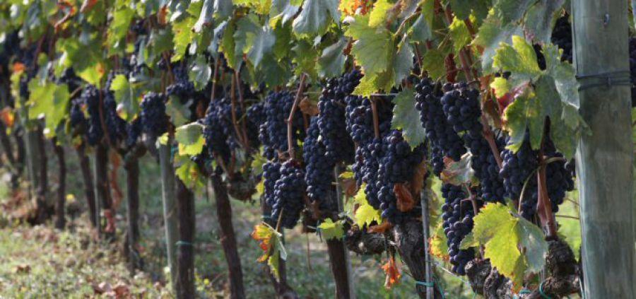 Toscano o Toscana