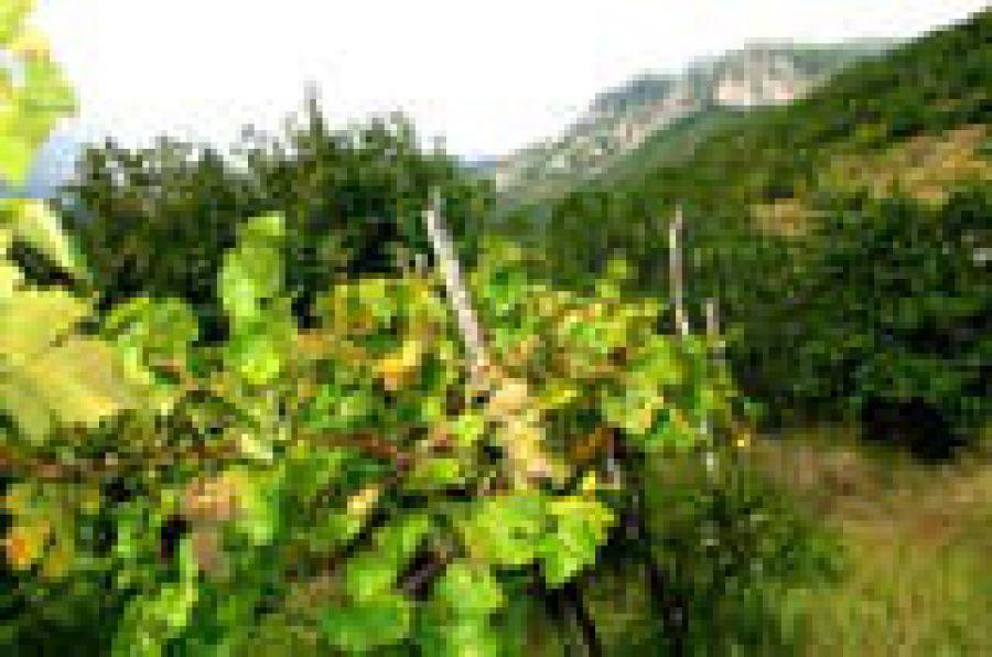 Colli di Salerno