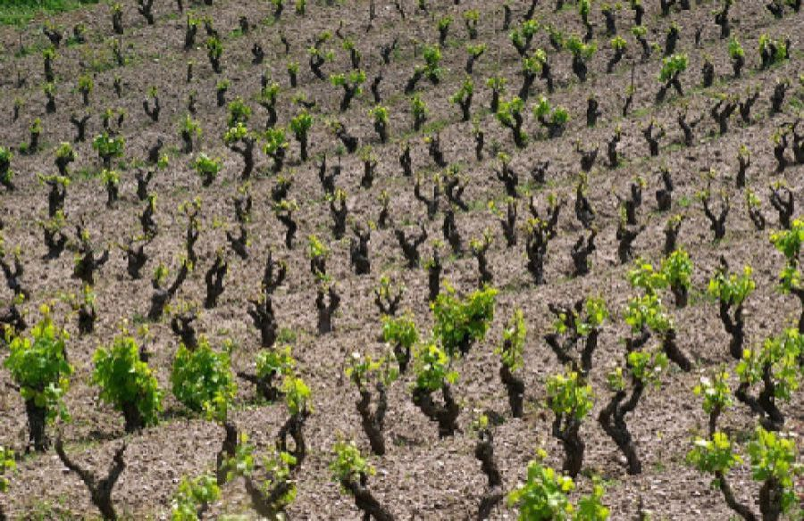 Moscato di Pantelleria, Passito di Pantelleria e Pantelleria