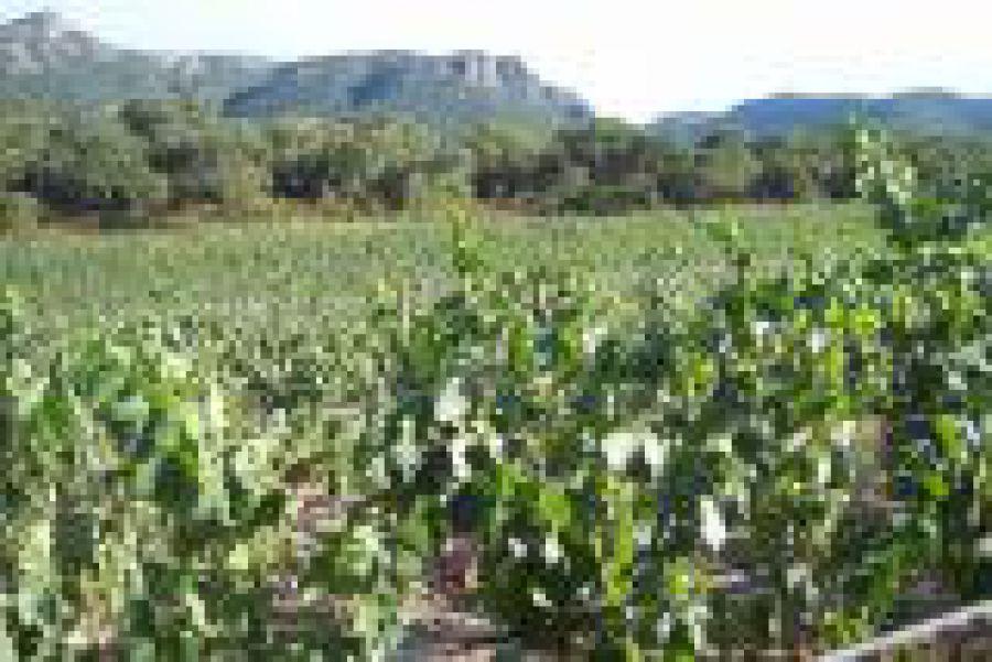 Sardegna Semidano