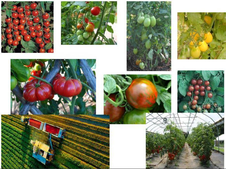 Nuove tecniche di miglioramento genetico in agricoltura/2