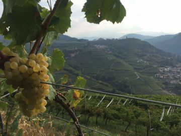 60° edizione della Festa dell'Uva nella Valle di Cembra