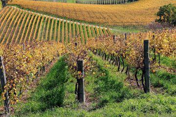 Enoregioni italiane: Apuane, Lunigiana e Lucchesia