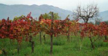 Enoregioni italiane: Alto Frusinate