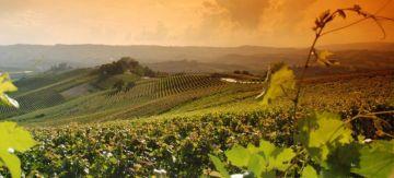 Piemonte Capitale Mondiale del Food?