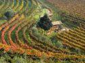 Enoregioni italiane: Valdadige Trentina