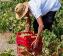 Pantelleria DOC: i vini vulcanici da viticultura eroica