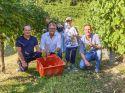Le Manzane: successo per la 10^ edizione della Vendemmia Solidale pro Lilt